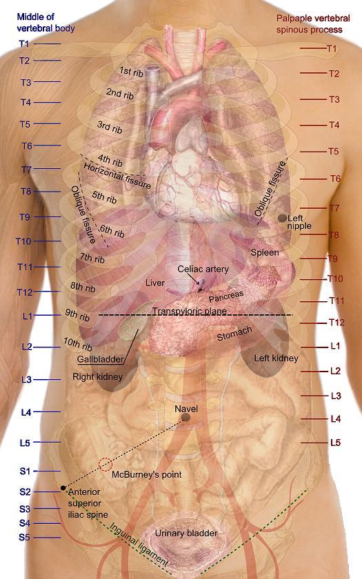 bilder avrge smerter nedre del av magen